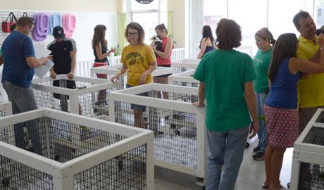 justpuppies     better puppies better prices better hurry