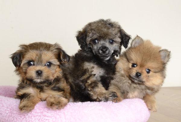 puppies orlando, puppies for sale, just puppies, just puppies orlando ...